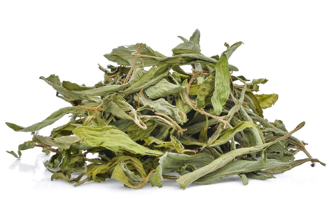 stevia-feuilles